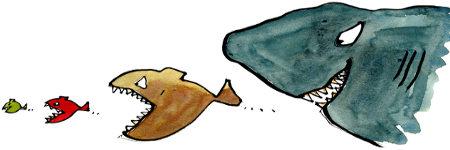 Fish food chain, image credit: Frits Ahlefeldt